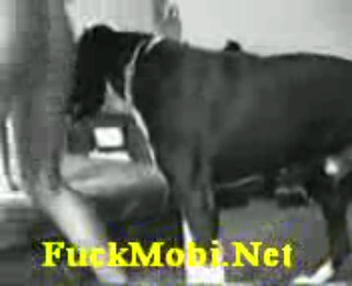 Download vidio bokep Amateur dog sex mp4 3gp gratis gak ribet